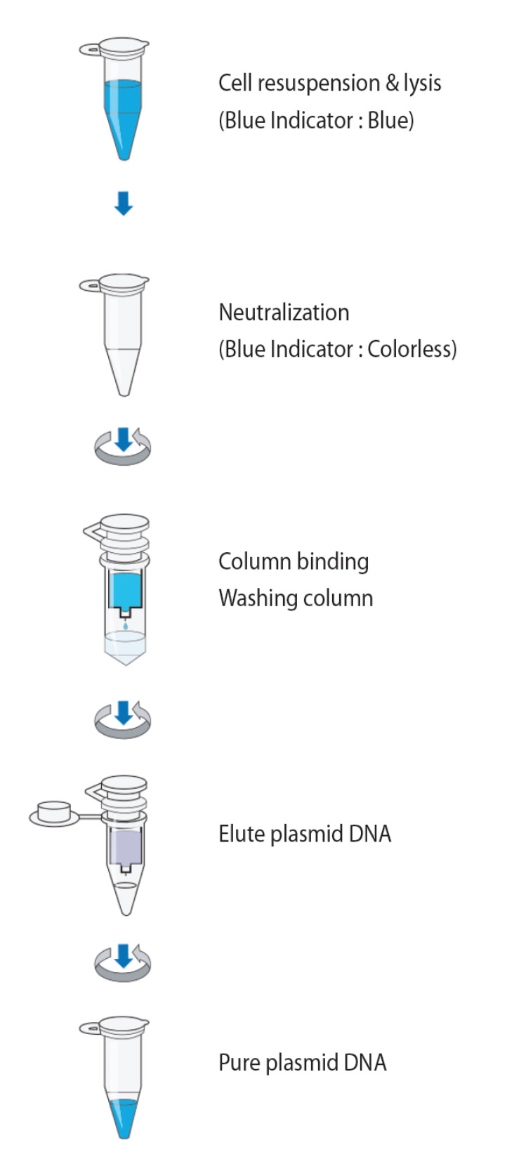 Gene Xpress Mygen Plasmid Mini Prep Kit