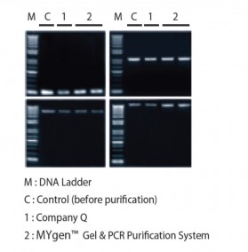 Gene Xpress Mygen Gel PCR Purification System
